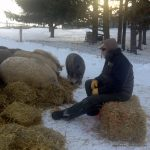 Winter wooly pigs with their farmer, Mark Baker.  Straw is the ticket to a warm bed.